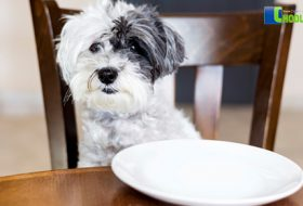 DOG DIET THE RIGHT FOOD FOR YOUR DOG